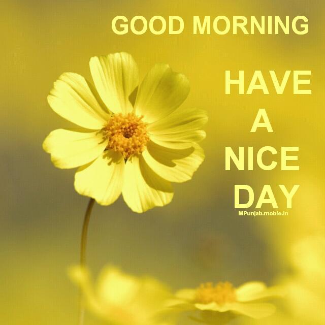 Whatsapp Good Morning Love Images: Good Morning Imag